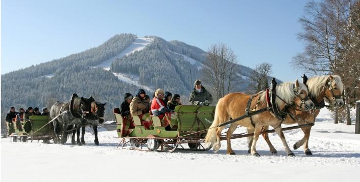 gemütliche Pferdeschlittenfahrt um den Kulmberg-Pension Alpina
